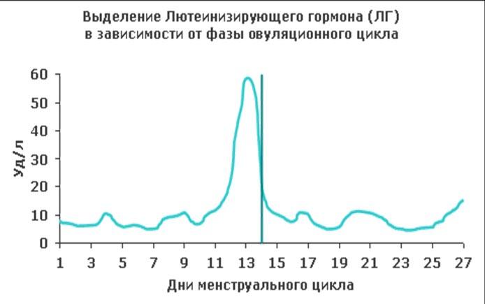 Уровень ЛГ в разные фазы цикла