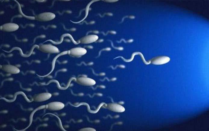 Сперматазойды как повысить подвижность