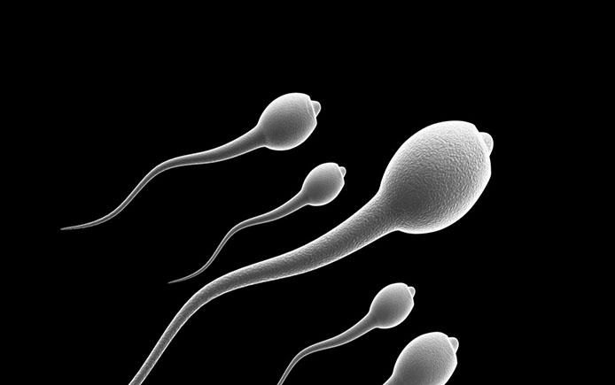 Спермтаозоиды