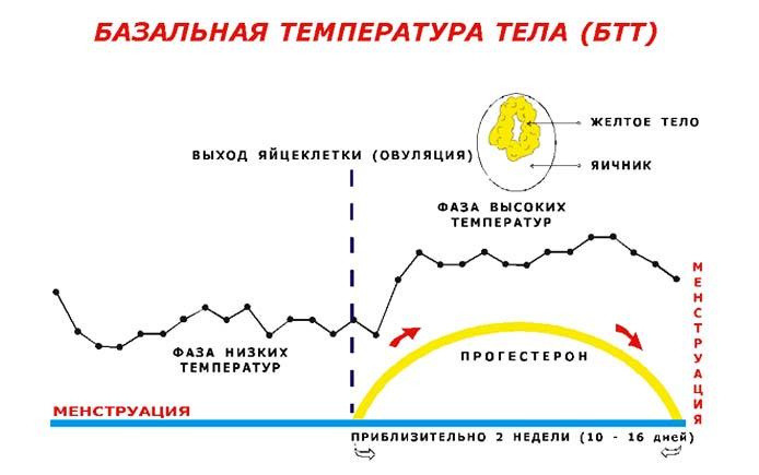 Какая базальная температура беременных 94