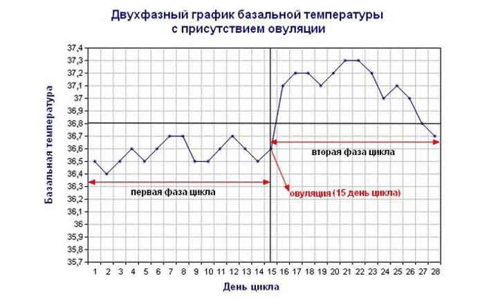 график базальной температуры норма и беременность