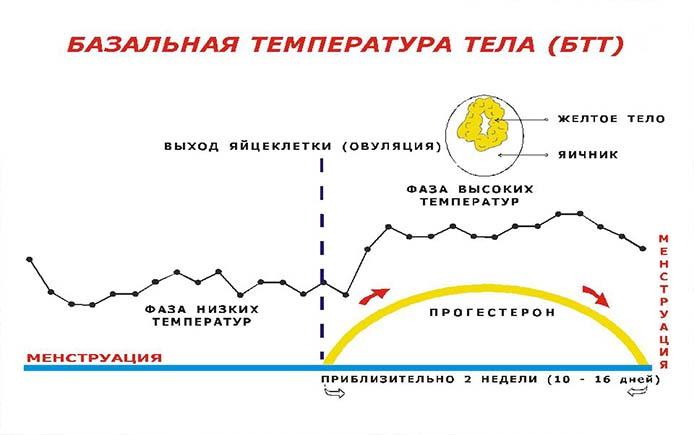 Как меняется БТТ