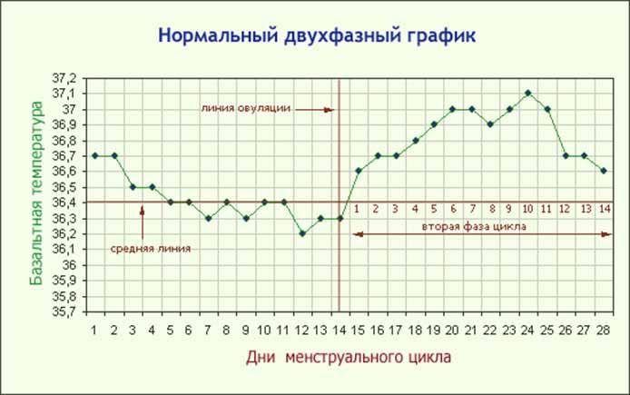 Нормальный двухфазный график БТ