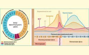 Фаза цикла кровянистых выделений