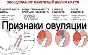 Признаки овуляторного процесса
